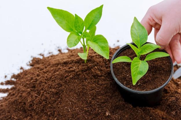 Stapel vruchtbaar land op een witte achtergrond. peper planten in plastic potten