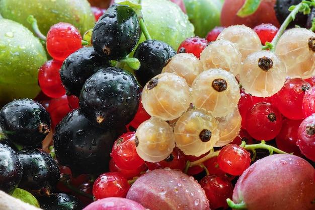 Stapel zomerrijpe rauwe bessen, zwarte bes, aalbes, kruisbes, braam.