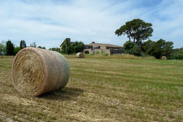 Stapels strobalen hooi opgerold in stapels die overblijven na het oogsten van tarweoren landbouwgrond...