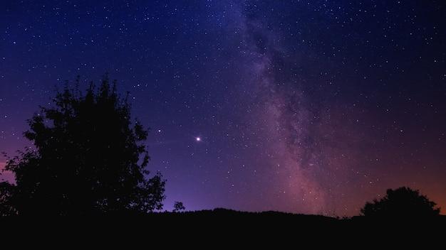 Stary nacht met boom silhouet achtergrond