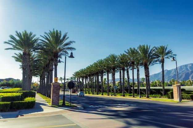 Steeg van palmen in de straten van ontario, californië