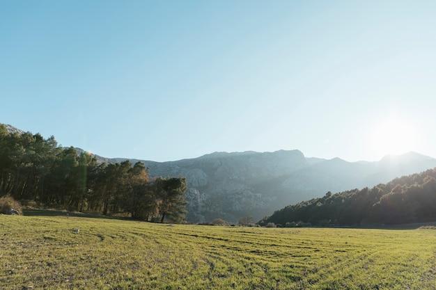 Steenachtige berg met bomenlandschap in zonlicht