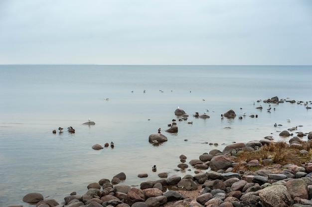 Steenachtige kust van de golf van finland, oostzee. zeemeeuwen op de stenen op een bewolkte dag. hoge kwaliteit foto