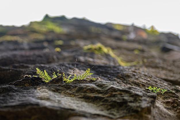 Steenmuur bij ruine rodenstein