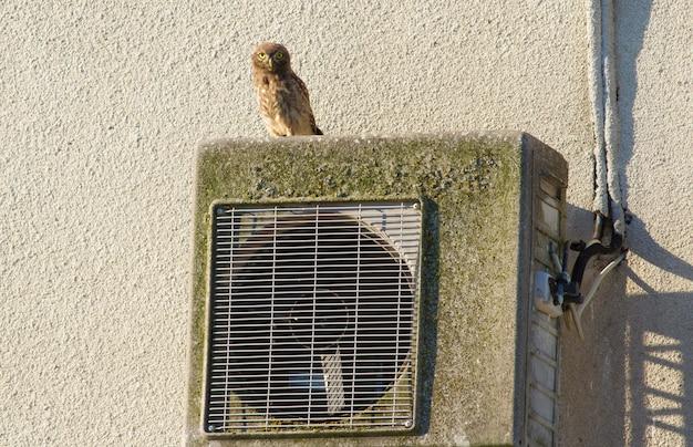Steenuil, athene noctua. een uil zit op een airconditioner die aan de muur van een oud huis is gemonteerd