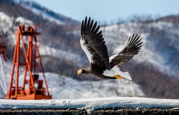 Stellers zeearend tijdens de vlucht over besneeuwde heuvels. japan. hakkaydo. shiretoko-schiereiland. shiretoko nationaal park.