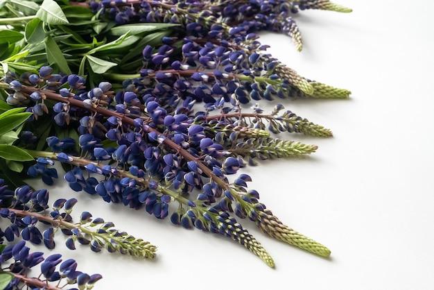 Stelletje blauwe lupine bloemen op wit