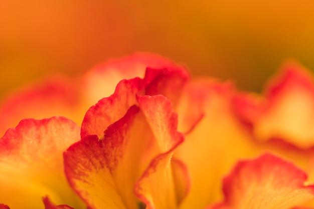 Stelletje geweldige rode en oranje verse bloemen
