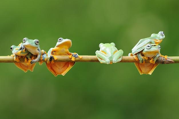 Stelletje kikkers op een bamboestok