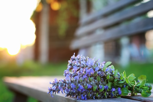 Stelletje lavendelbloemen op een zomeravondzonsondergang
