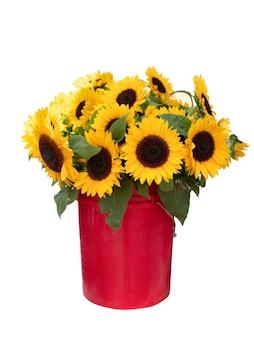 Stelletje zonnebloemen in rode emmer geïsoleerd op wit