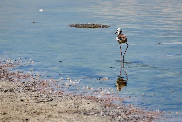 Stelt en zijn weerspiegeling bij de raco de l'olla in valencia, spanje