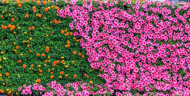 Stenen bloemenparken openbare bloemenbloesem