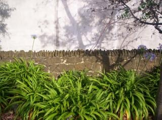 Stenen muur, eucalyptus