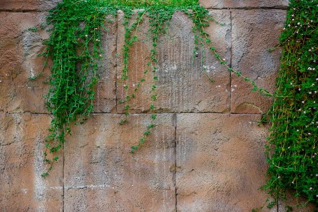 Stenen muur met mooie witte en groene bloemen.