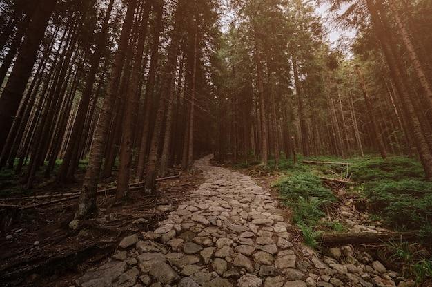 Stenen weg in een naaldbos in de bergen