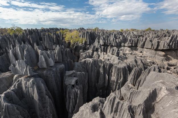 Stenen woud van natuurreservaat tsingy de bemaraha madagaskar