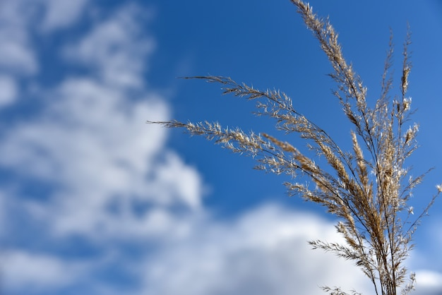 Stengels van droog gras tegen de achtergrond