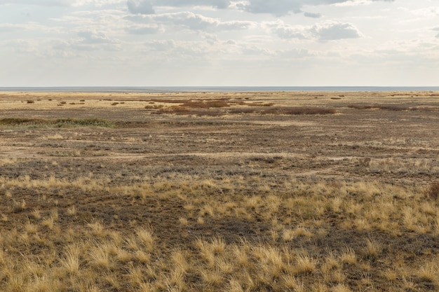 Steppe in kazachstan, droog gras in de grenzeloze steppe. herfst landschap