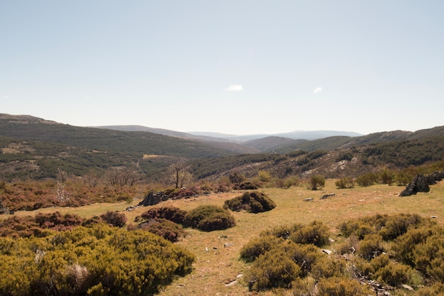 Steppe platteland