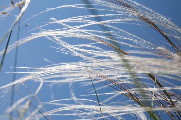 Steppe pluizig verengras in zonlicht tegen een blauwe lucht