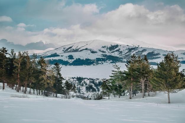 Sterk winterlandschap met bergen en sparren in aparan, armenië