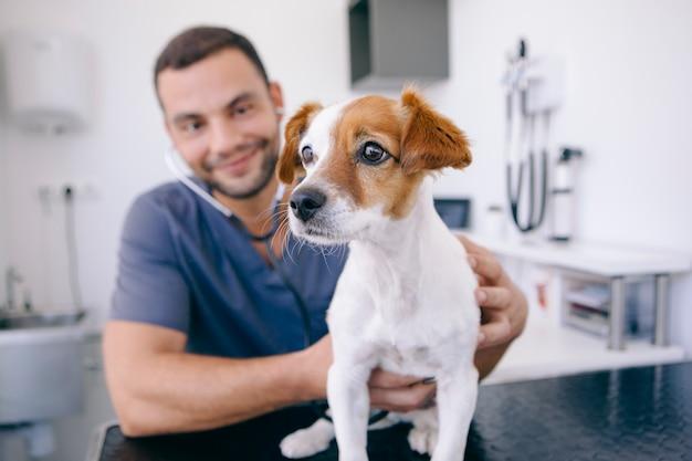 Sterke hartslag van een gezonde hond