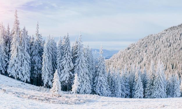 Sterrenhemel in de winter besneeuwde nacht. fantastische melkweg in het nieuwe