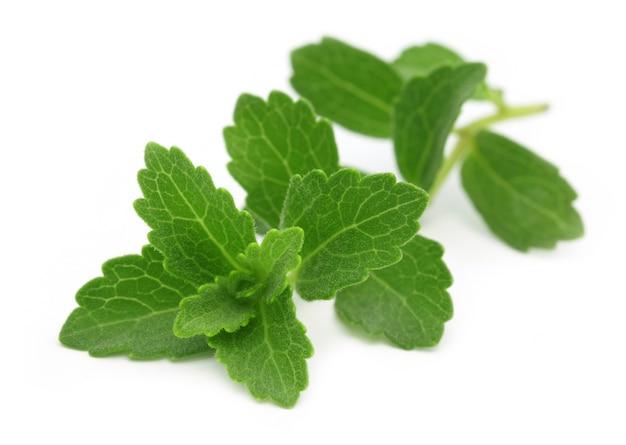 Stevia- een vervanger van suiker geïsoleerd op witte achtergrond