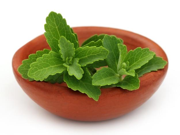 Stevia op een bruine kom op witte achtergrond