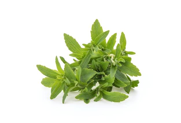 Stevia tak groene bladeren geïsoleerd.