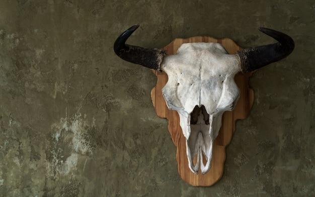 Stierenschedel aan de muur gehangen
