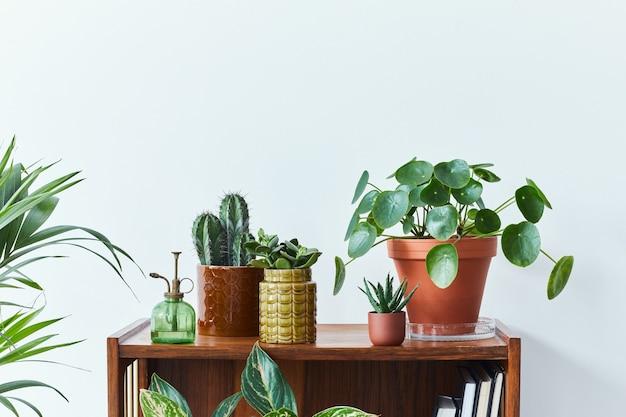 Stijlvolle compositie van huistuininterieur gevuld met veel mooie planten, cactussen, vetplanten, luchtplant in verschillende designpotten. witte muur. ruimte kopiëren. home tuinieren concept home jungle.