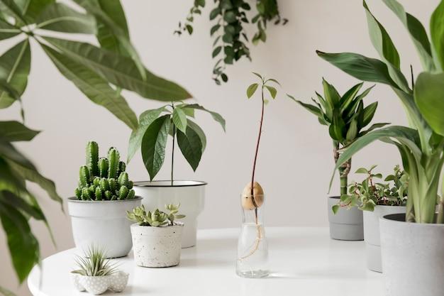 Stijlvolle en botanische samenstelling van de binnentuin van het huis vulde veel planten in verschillende ontwerpen, elegante potten op de witte tafel.