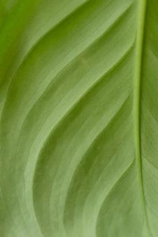 Stilleven groene plant binnenshuis
