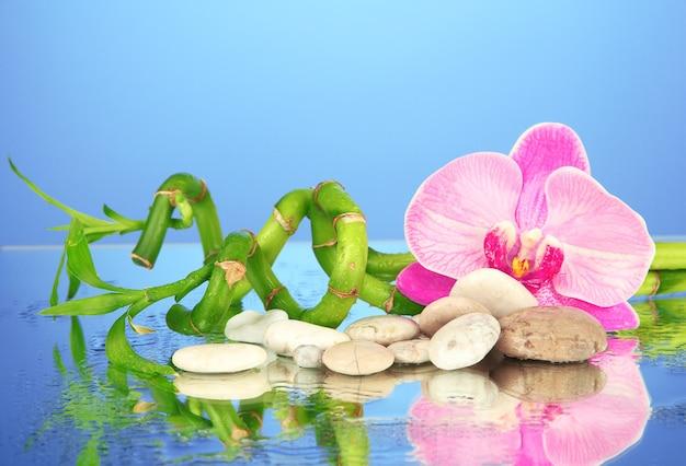 Stilleven met groene bamboeplant, orchidee en stenen, op blauw