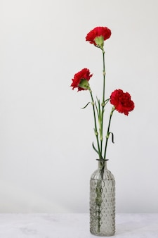 Stillevenassortiment van binnenlandse bloemen in vaas