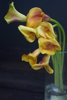 Stillevenboeket van geeloranje calla lelies in een glasvaas op een donkere, selectieve nadruk