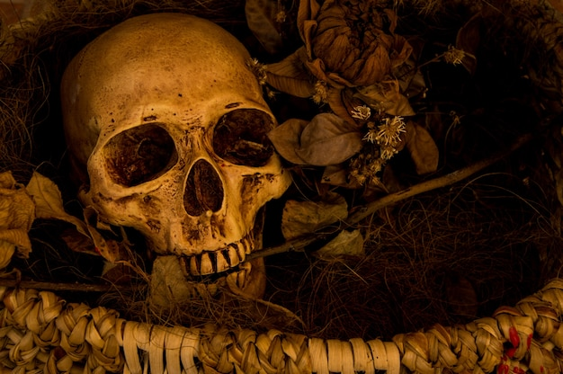 Stillevenfotografie met menselijke schedel