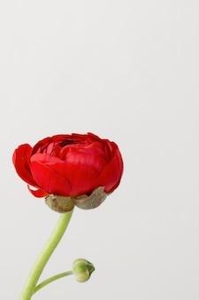 Stillevenregeling van binnenlandse bloem in vaas