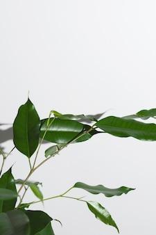 Stillevenregeling van groene kamerplant