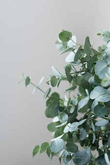 Stillevensamenstelling van groene plant binnenshuis