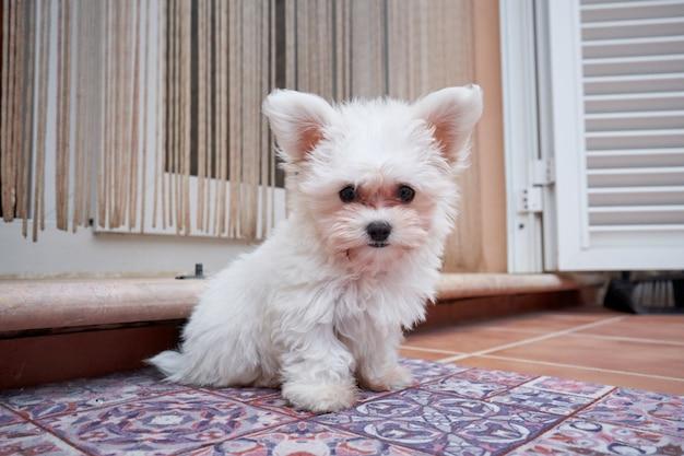Stockfoto van een kleine hond die op zijn blinde buiten het terras zit. huisdier en thuis
