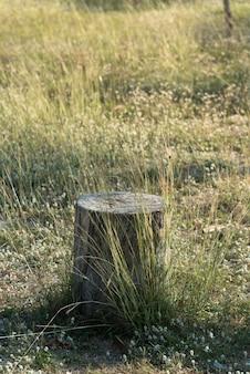 Stomp boom plant op groen grasveld