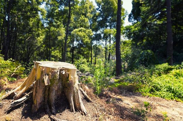 Stomp in het bos