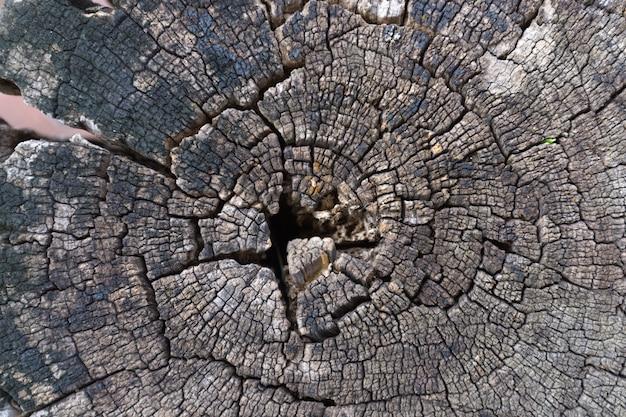 Stomp van de achtergrond van de boomtextuur of de achtergrond van de houten dwarsdoorsnede.
