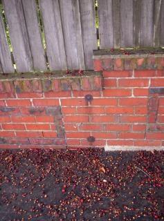 Stoned bakstenen muur