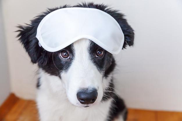 Stoor me niet, laat me slapen. grappige schattige lachende puppy hondje border collie met slapende oogmasker thuis binnen achtergrond. rust, goede nacht, siësta, slapeloosheid, ontspanning, moe, reisconcept.