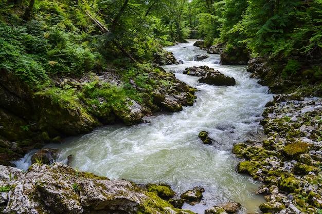 Stormachtige bergrivier en rotsachtige kust. forest valley.