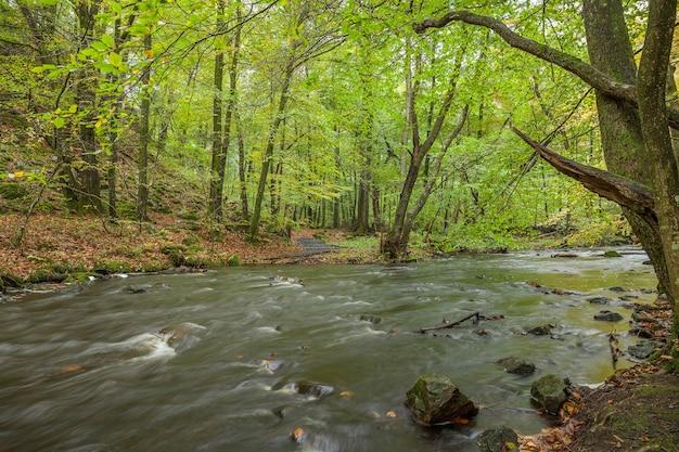 Stormachtige rivier die door het bos van de lente stroomt